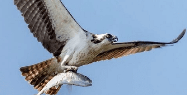 VIDEO) Here Is How To Photograph Flying Birds - Nature Photography HD