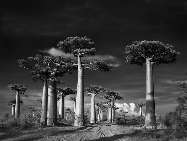 1-Photographing-The-Worlds-Oldest-Trees-For-The-Past-14-Years-b