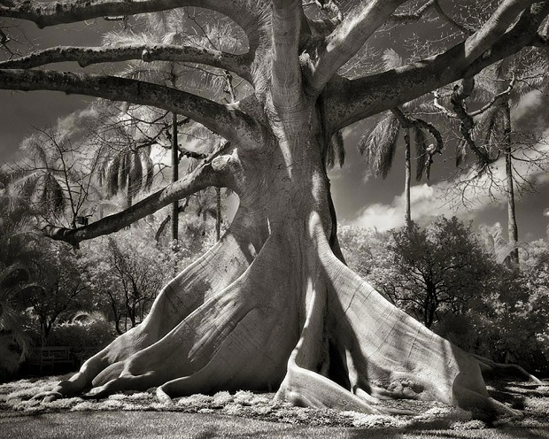 1-Photographing-The-Worlds-Oldest-Trees-For-The-Past-14-Years-c