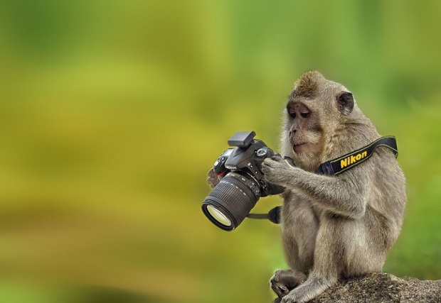 15h-Animals-That-Want-To-Be-Photographers