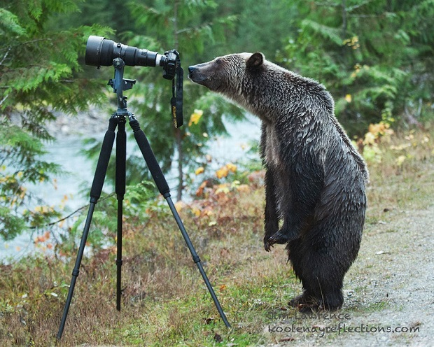 15i-Animals-That-Want-To-Be-Photographers