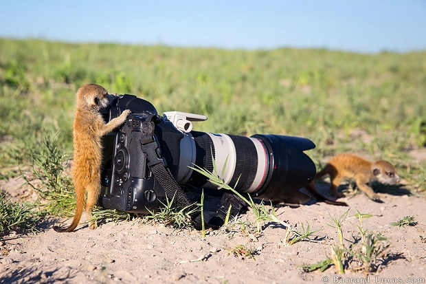 15j-Animals-That-Want-To-Be-Photographers