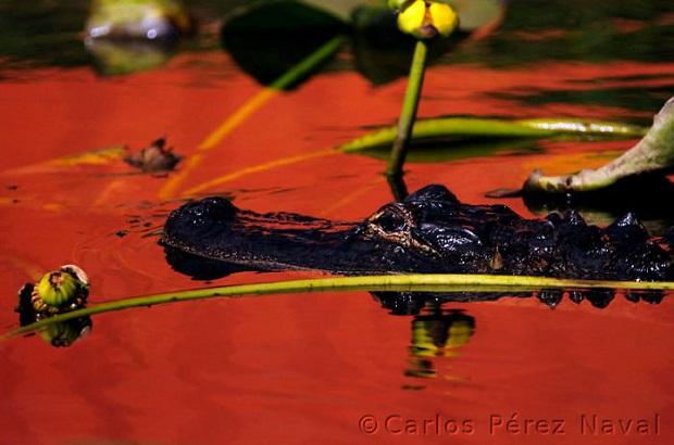 3d-Wildlife-Photography-Carlos-Perez-Naval