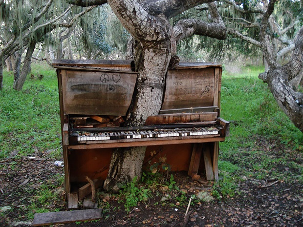 The Old Piano Tree, California Image credits: Crackoala