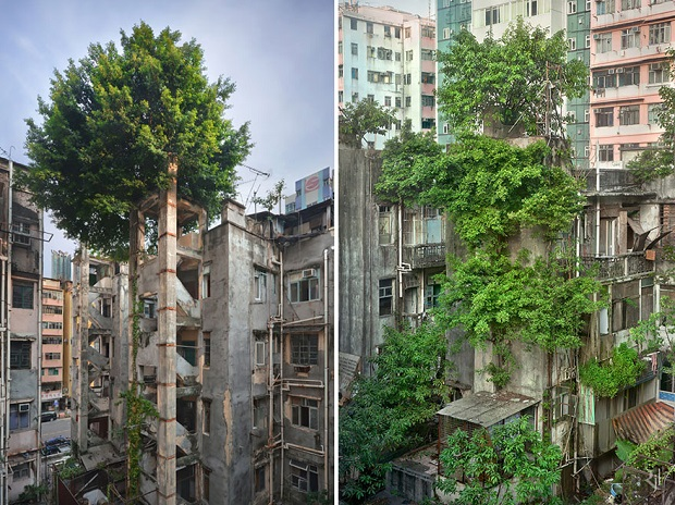 Trees Winning Against Concrete In Hong Kong Image credits: Romain JL