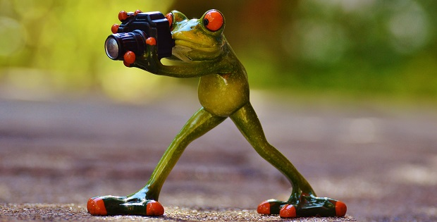 1-The-Photographer-Frog_0_Featured