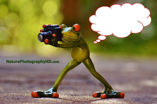 Caption This Photo: The Photographer Frog